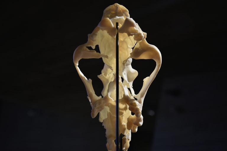 vytištěná lebka
