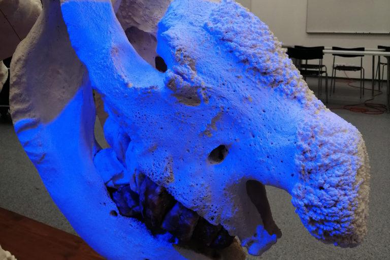 3D skenovanie kostry